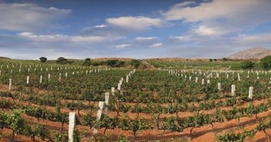 The Best Vineyards and Wineries to Visit in India 1